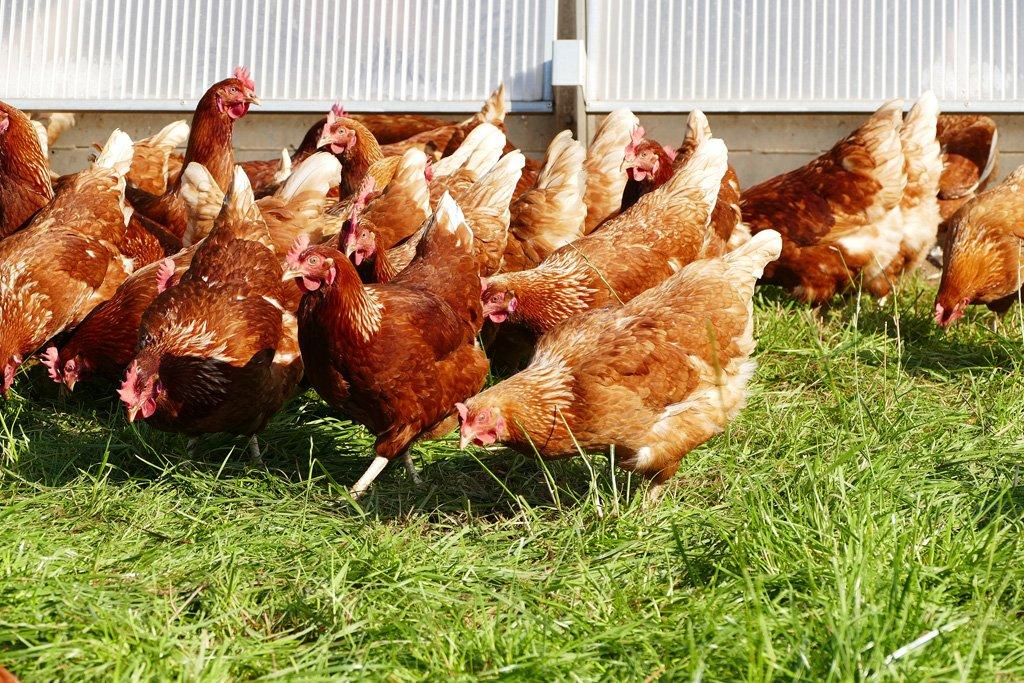 Bio Eier für Siegen - Siegerländer Weideei  Immer in Kontakt mit den Anderen