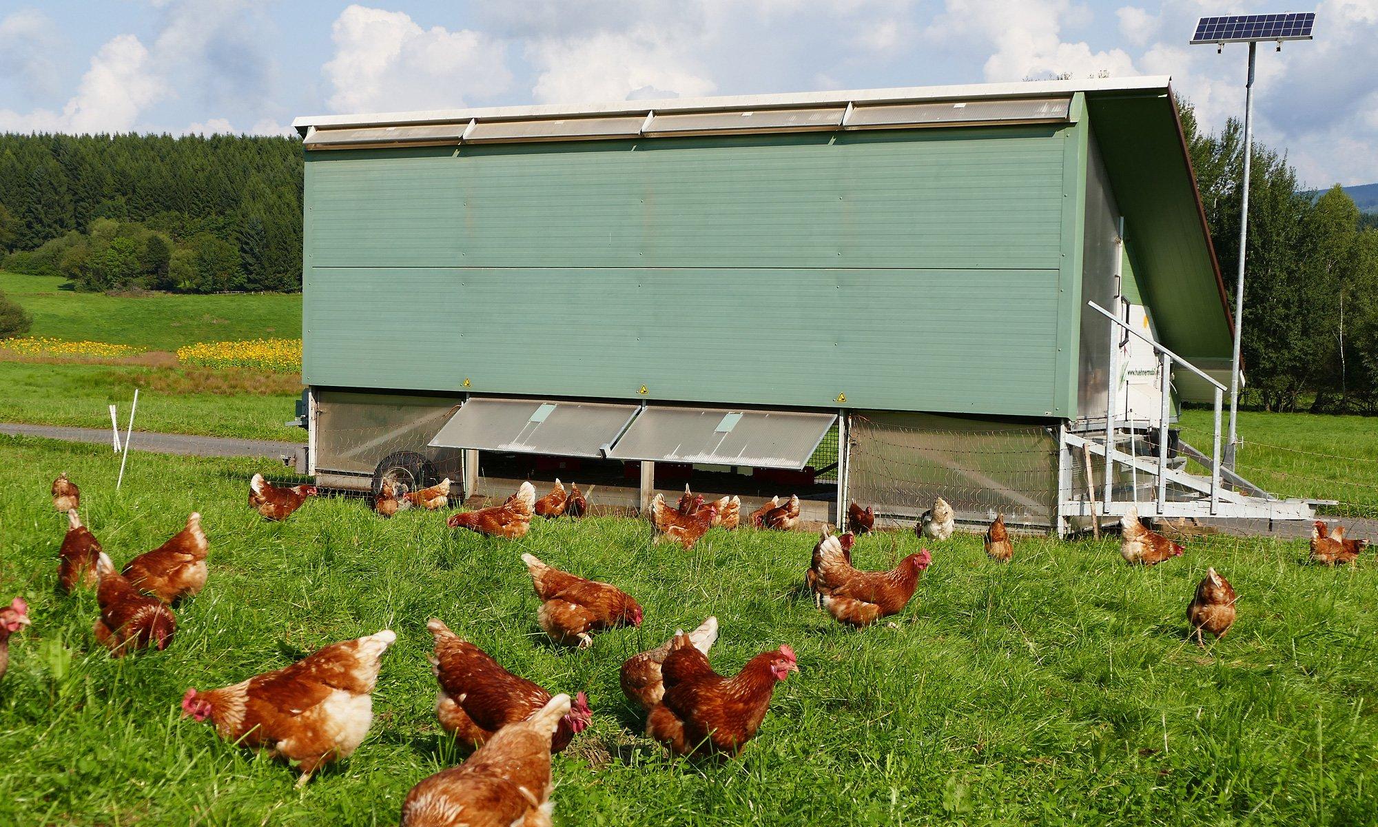Bio Eier Siegerland - artgerechte Hühnerhaltung auf der Weide und im Mobilstall im Siegerland